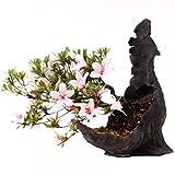 Bonsai - Shohin Jap. Satsuki Azalee 'Hi-no-Maru', Rhododendron indicum 183/61