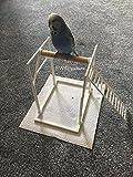 Bird Perch Trespolo per Uccelli. Perfetto per pappagallini, pappagalli, ECC. Parco Giochi per Uccelli. Cattura Gli Escrementi (incl. Attacco a Scala).