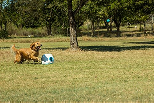 iFetch Too Automatic Ball Launcher for Larger Dogs 7