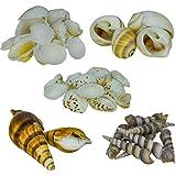 AVMART Sea Shells For Home Decor, Aquarium, Pack Of 5