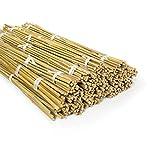 casa pura Tuteurs pour Plantes - Canne Bambou   Tige de Bambou Naturelle pour Légumes, Tomates, Etc   Piquet de Qualité Supérieur   en Lot