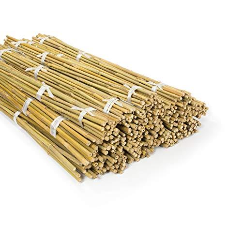 casa pura Bambusstäbe Bahia in Gärtner-Qualität | Bambus Rankhilfe Pflanzenhalter Pflanzstab Rankstab | Verschiedene Längen und Sets (150 cm Länge, 10 Stück)