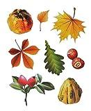 dpr. Fensterbild Set 8-Teilig Herbst Kürbis Blätter Laub Hagebutte Nüsse Fensterdeko Herbstdeko