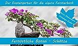SAFLAX - Anzuchtset - Fernöstliche Bonsai-Schätze - Mit 2 Samensorten, Gewächshaus, Anzuchtsubstrat, Zellfasertöpfen zum Umtopfen und Anleitung
