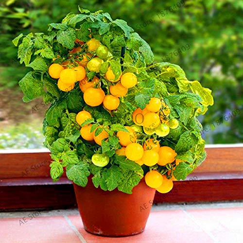 Bloom Green Co. Perte de promotion! 100pcs / sac flores tomate cerise. Rare Balcon potager fruits bio Bonsai plantes en pot (rouge, jaune) Pour: 12