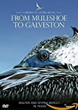 A Profile of Nature Special - from Muleshoe to Galveston [Reino Unido] [DVD]