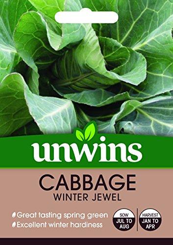 Unwins semillas de Chou-Joya de la invierno
