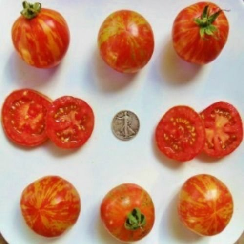 Red Zebra Tomate sät Schöne Gestreift, 40 Samen