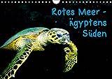 Rotes Meer - Ägyptens Süden (Wandkalender 2019 DIN A4 quer): Unterwasseraufnahmen während einer Tauchsafari zu den St. John's-Inseln (Monatskalender, 14 Seiten ) (CALVENDO Tiere)