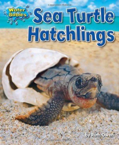 sea-turtle-hatchlings-water-babies-by-ruth-owen-2012-08-01