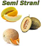 30 Semi Di 3 Varietà Di Melone: Melone Giallo Delle Canarie, Melone Verde Piel De Sapo, Melone Retato Del Marocco, Più Piccola Guida Coltivazione