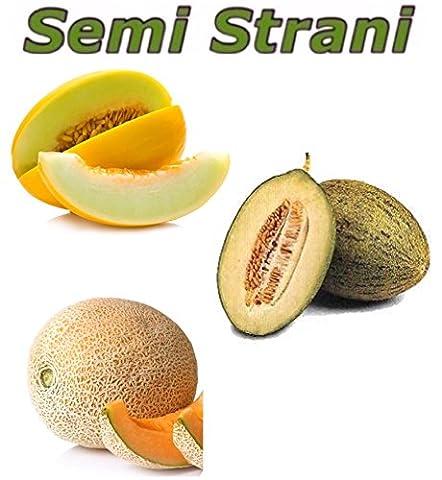 30 GRAINES: MELON JAUNE CANARI, MELON VERT PIEL DE SAPO et MELON CANTALOUP DU MAROC - Verde Melone Seeds