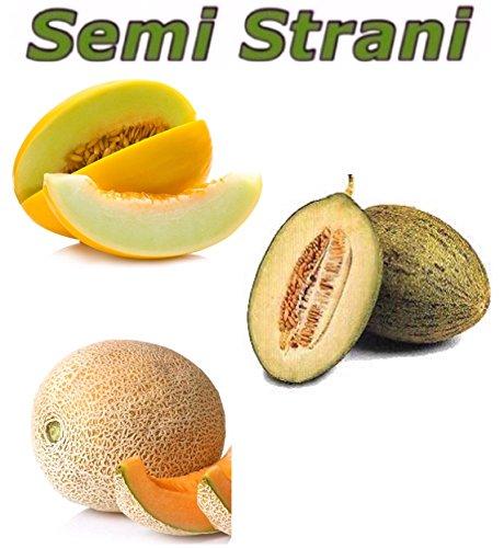 30-graines-melon-jaune-canari-melon-vert-piel-de-sapo-et-melon-cantaloup-du-maroc