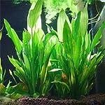 Legendog Artificial Aquatic Plants, 10 Pcs Aquarium Plants Plastic Fish Tank Decorations, Artificial Green Plant Grass… 16
