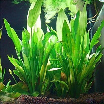 Legendog Artificial Aquatic Plants, 10 Pcs Aquarium Plants Plastic Fish Tank Decorations, Artificial Green Plant Grass… 8