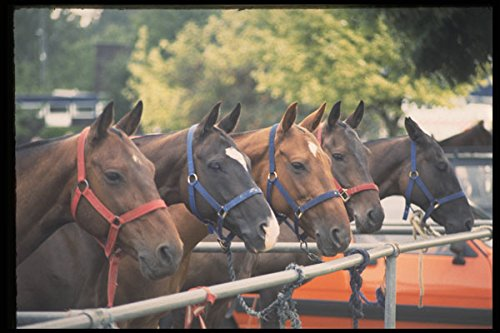 361075 Westchester Cup '92 Pony Lines Guards Polo Club A4 Photo Poster Print 10x8 -