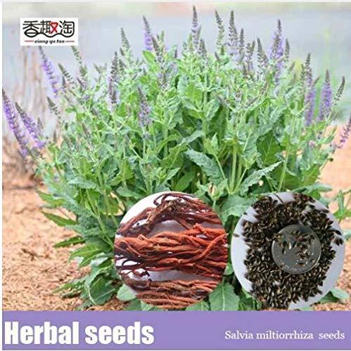 portal cool 100 pz salvia erba seeds ornamentale perenne erbe facile da coltivare heirloom