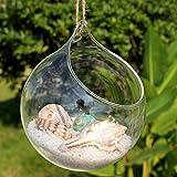 Dealglad® Rund Transparent Glas Blumentopf zum Aufhängen Glas Vase Home Decor Ornament, Glas, farblos, 15 * 15 * 15cm