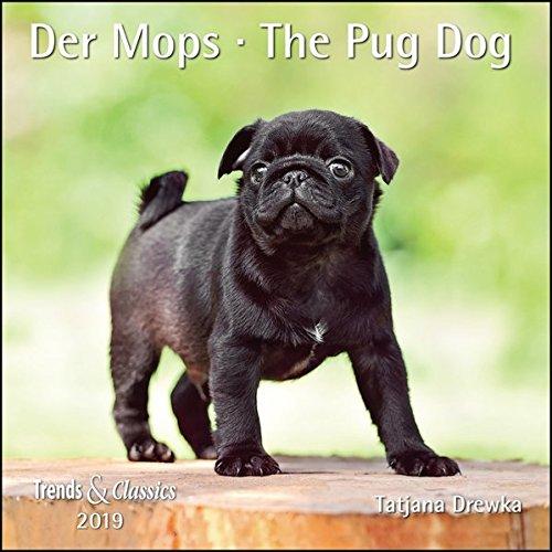 Der Mops The Pug Dog 2019 - Broschürenkalender - Wandkalender - mit herausnehmbarem Poster - Format 30 x 30 cm (Hirsche China)