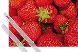 1art1 Poster + Hanger: Früchte Poster (91x61 cm) Süße Erdbeeren Inklusive Ein Paar Posterleisten, Transparent