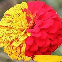 100 / Rock Cress, SEMI Aubrieta Cascade Fiore viola, Deer Resistente superba copertura del terreno perenne, semi di fiori per il giardino di casa