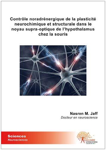 Contrôle noradrénergique de la plasticité neurochimique et structurale dans le noyau supra-optique de l'hypothalamus chez la souris