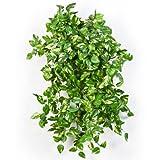 artplants Set 2 x Künstliche Mini Pothos-Buschranken RAHU, 560 Blätter, grün-gelb, 55 cm - Kunstranke