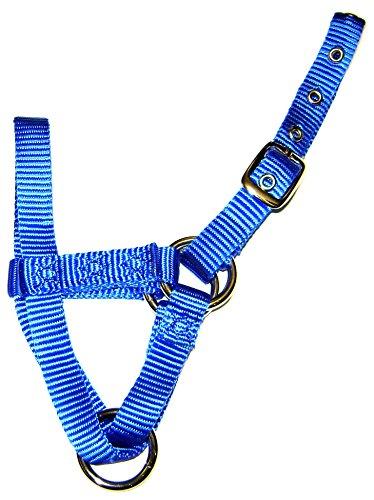 Hamilton Alpaka-Halfter mit Schnalle, verstellbar, 12,7 x 20,3 cm, Average, blau -
