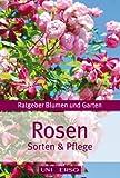 Ratgeber Garten - Rosen -Sorten & Pflege