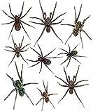 1art1 62740 Spinnen - Arachnophobie Wand-Tattoo Aufkleber Poster-Sticker 110 x 35 cm