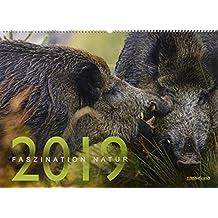 Faszination Natur Kalender 2019: Das Bild aus WILD UND HUND