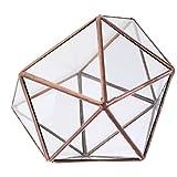 sharplace Modern Glas Metall Geometric Terrarium Karton Metall Tischplatte Sukkulente Farn, kupfer, 12 x 12 x 12cm