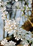 Natur am Meer - Wälder, Gärten und Blumen am Rande der Ostsee (Wandkalender 2019 DIN A4 hoch): Die Mecklenburger Ostseeküste und ihr Umland werden ... (Monatskalender, 14 Seiten ) (CALVENDO Natur)