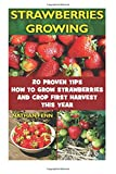 Strawberries Growing: 20 Proven Tips How to Grow Strawberries and Crop First Harvest This Year