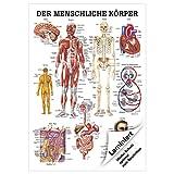 Der menschliche Körper Lehrtafel Anatomie 100x70 cm medizinische Lehrmittel