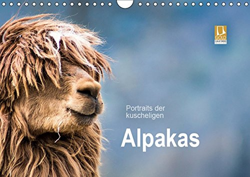 Portraits der kuscheligen Alpakas (Wandkalender 2019 DIN A4 quer): Ein Kalender mit stimmungsvollen Alpaka Portraits. (Monatskalender, 14 Seiten ) (CALVENDO Tiere)