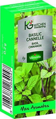 KG BY VILMORIN 8200009 Jardinières Basilic Cannelle Vert 7 x 3 x 2 cm
