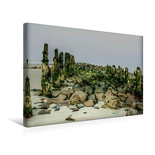 45 Weiße Ellenbogen (Calvendo Premium Textil-Leinwand 45 cm x 30 cm quer, Typische Buhne   Wandbild, Bild auf Keilrahmen, Fertigbild auf echter Leinwand, Leinwanddruck Natur Natur)