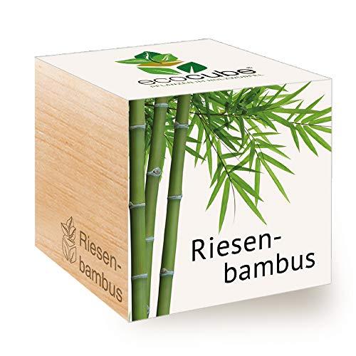 Feel Green Ecocube Riesenbambus, Nachhaltige Geschenkidee (100{86eef4c67e64317d5d022ed3e8a9fa29d60451f8f76b6bd0dbe9fbc036e0e62d} Eco Friendly), Grow Your Own/Anzuchtset, Pflanzen Im Holzwürfel, Made in Austria