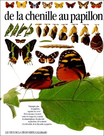 DE LA CHENILLE AU PAPILLON