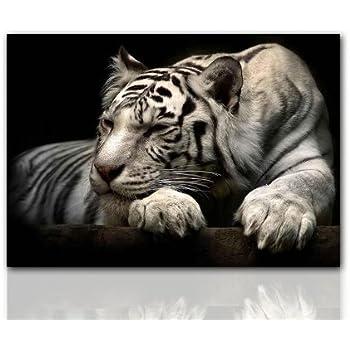 tigerbild tierbild wandbild white tiger 100x70cm leinwanddruck seltene tiere traumhaft. Black Bedroom Furniture Sets. Home Design Ideas