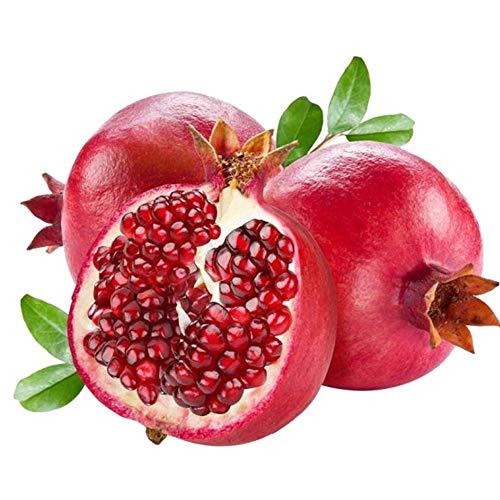 MEIGUISHA Gartensamen -Raritäten Exotics BIO Granatapfel baum Obst Punica granatum Fruchtsamen Saatgut mehrjährig winterhart saftig Exotik für Terrasse und Balkon