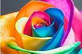 Yolandabecool Seltene Regenbogen Rose Blumensamen Ihre Liebhaber Multi-color Pflanzen Hausgarten 20stücke