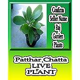 Raj Garden Plants Patharchatta,पत्थर चट्ट&#X93E