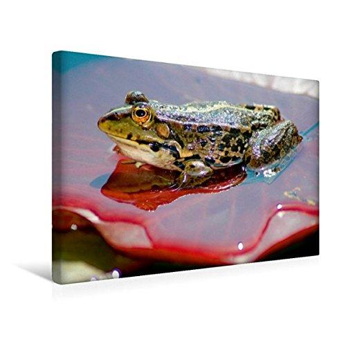 Calvendo Premium Textil-Leinwand 45 cm x 30 cm Quer, Ein Motiv aus Dem Kalender FROSCHBUCH | Wandbild, Bild auf Keilrahmen, Fertigbild auf Echter Leinwand, Leinwanddruck Natur Natur