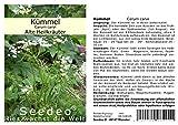 Seedeo Kümmel (Carum carvi) ca 200 Samen