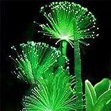 Rosepoem 100Pcs Smaragd-Leuchtstoffblumensamen-einfache Sorgfalt