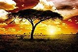 1art1 Afrique Posters XXL - Coucher De Soleil, Acacia dans La Savane (120 x 80 cm)