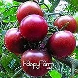 SONIRY Germinazione dei Semi: Hot Bella Yellow Pear Pomodoro, Verdura in Vaso sementi biologiche di Frutta del Pomodoro a Casa Giardino pc/Sacchetto, HyNC: