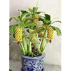 Hemore 30 Samen für Zwergbananen, Bonsai-Balanen, Tropische Früchte, Bonsai-Balkonblüte für Zuhause, Keimrate von 95%